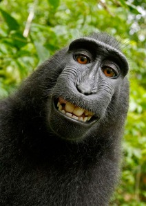 simian-monkey-self-portrait